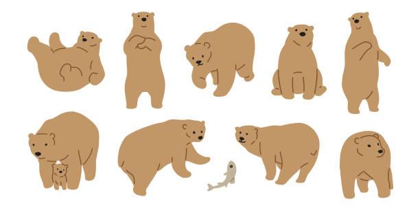 illustrations, cliparts, dessins animés et icônes de vecteur d'ours ours polaire icône logo illustration personnage doodle marron - ours