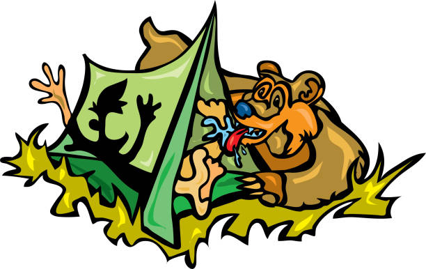 Bear wakes camper in tent by licking his feet vector art illustration