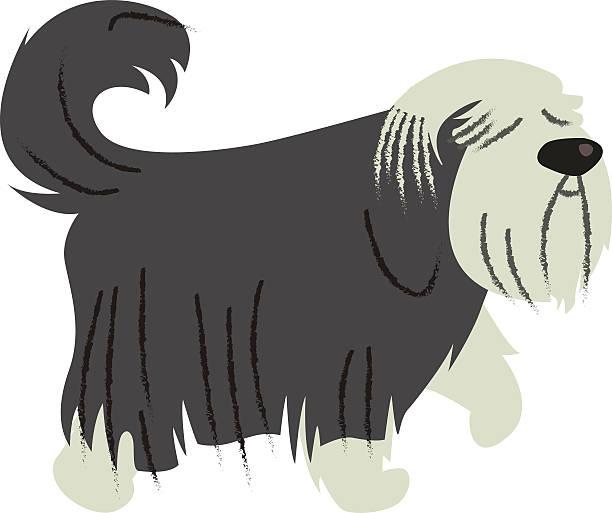 Bearded Collie vector art illustration