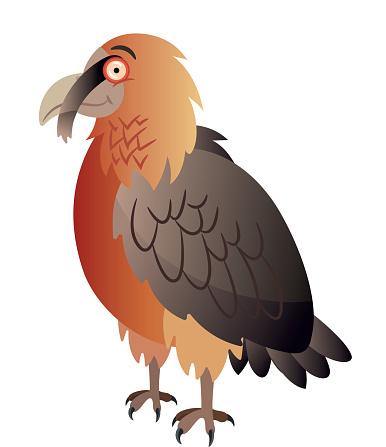 Bearded vulture or Lammergeier