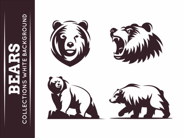 Bears collections Bears collections - vector illustration on white background mascot stock illustrations