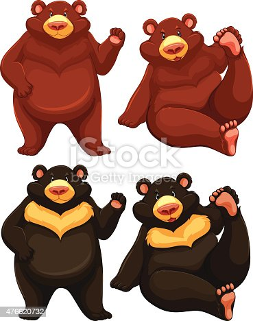 Set of two brown bears and two black bears