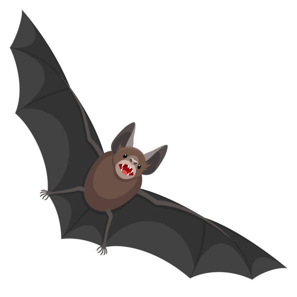 fladdermus - bat stock illustrations