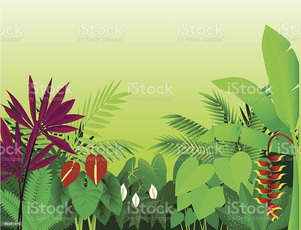 Beauatiful forest vector art illustration