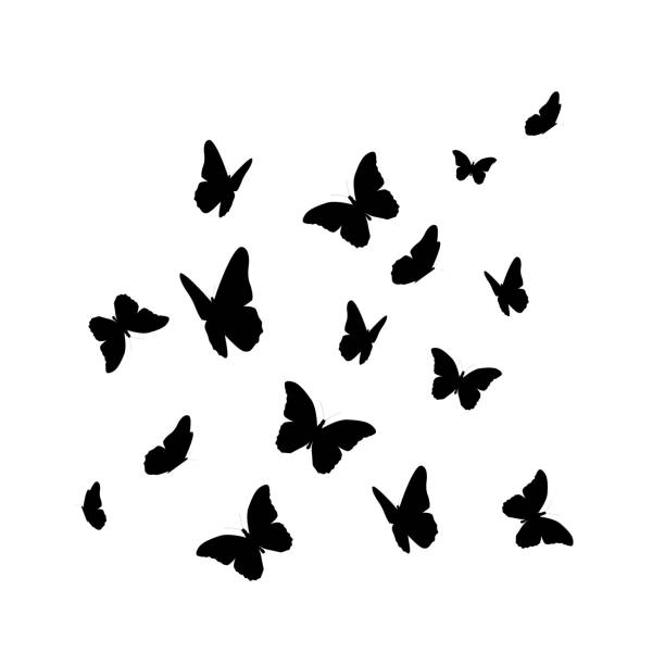illustrations, cliparts, dessins animés et icônes de beautifil papillon silhouette isolée on white background vect - papillon