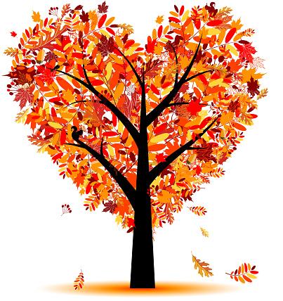 Beautiful autumn tree, heart shape from leaf