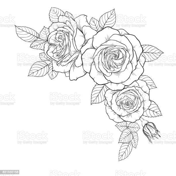 Beautiful black and white bouquet rose and leaves floral arrangement vector id831555158?b=1&k=6&m=831555158&s=612x612&h=cwawllalsn0lwaiimhlaanaysrbxyaon8sqybdse3jm=