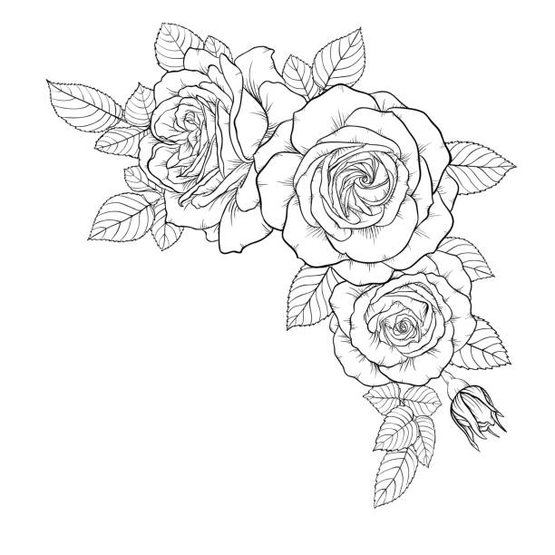 beautiful black and white bouquet rose and leaves. Floral arrangement isolated on background. design greeting card and invitation of the wedding, birthday, Valentine s Day, mother s day, holiday vector art illustration