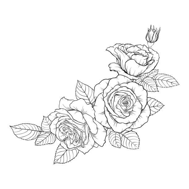 illustrations, cliparts, dessins animés et icônes de beau noir et blanc bouquet rose et feuilles. arrangement floral isolé sur fond. conception de cartes de voeux et invitation de mariage, anniversaire, valentine s day, fête des mères s, location vacances - tatouages de fleurs