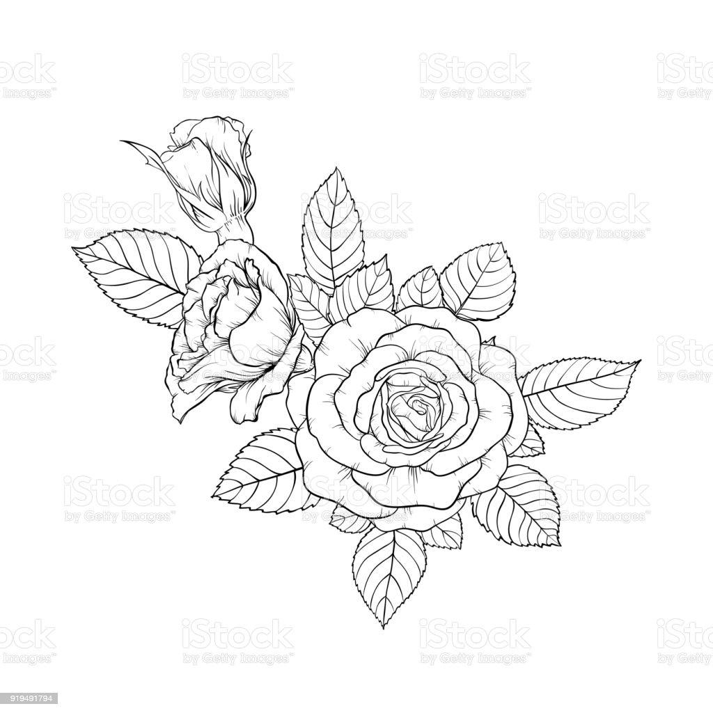 hermoso ramo blanco y negro color de rosa y hojas. Arreglo floral aislado sobre fondo. diseño de tarjetas de felicitación e invitación de la boda, cumpleaños, día de San Valentín s, día de la madre s, vacaciones - ilustración de arte vectorial