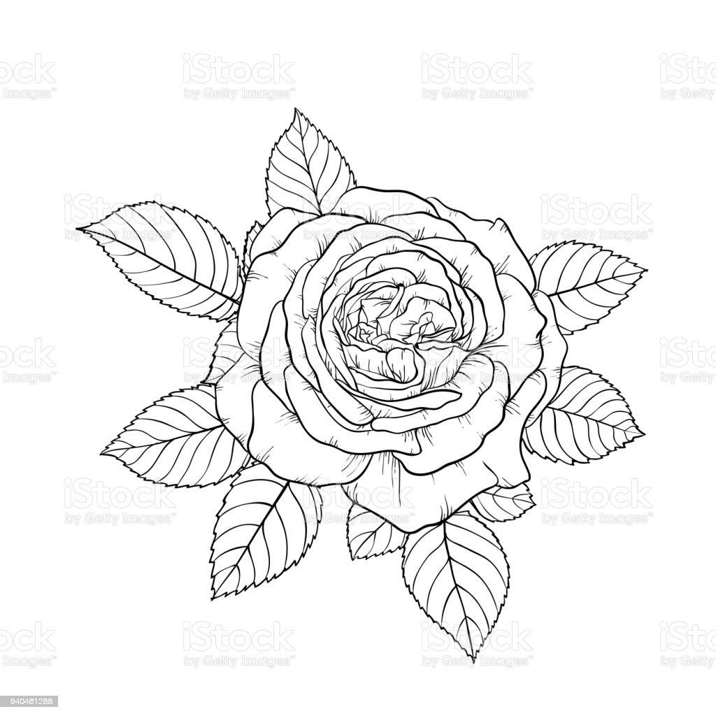 Beau Noir Et Blanc Bouquet Rose Et Feuilles Arrangement Floral Isole
