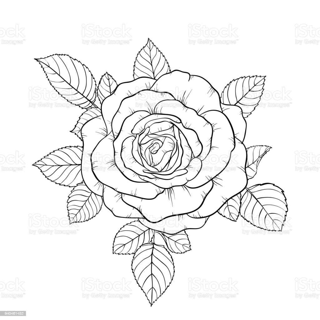 Beautiful Black And White Bouquet Rose And Leaves Floral