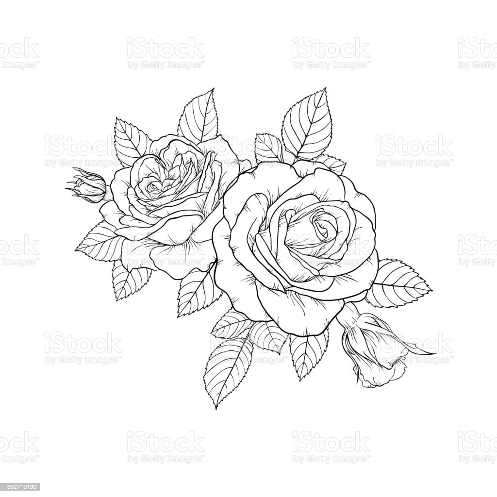 Beautiful Black And White Bouquet Rose Leaves Floral Arrangement Isolated On Background Design