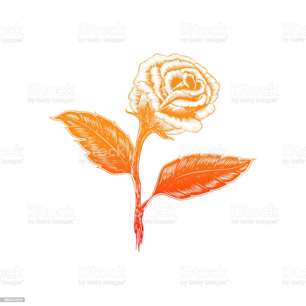 Beautiful black and white bouquet rose and leaves floral arrangement beautiful black and white bouquet rose and leaves floral arrangement isolated on background design izmirmasajfo