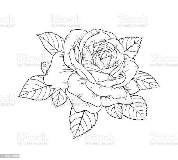 Beautiful black and white rose and leaves floral arrangement isolated vector id912625308?b=1&k=6&m=912625308&s=612x612&h=mz2hn2vqnaqnpggxvk4dzxie46dsgni50zupxtd q e=