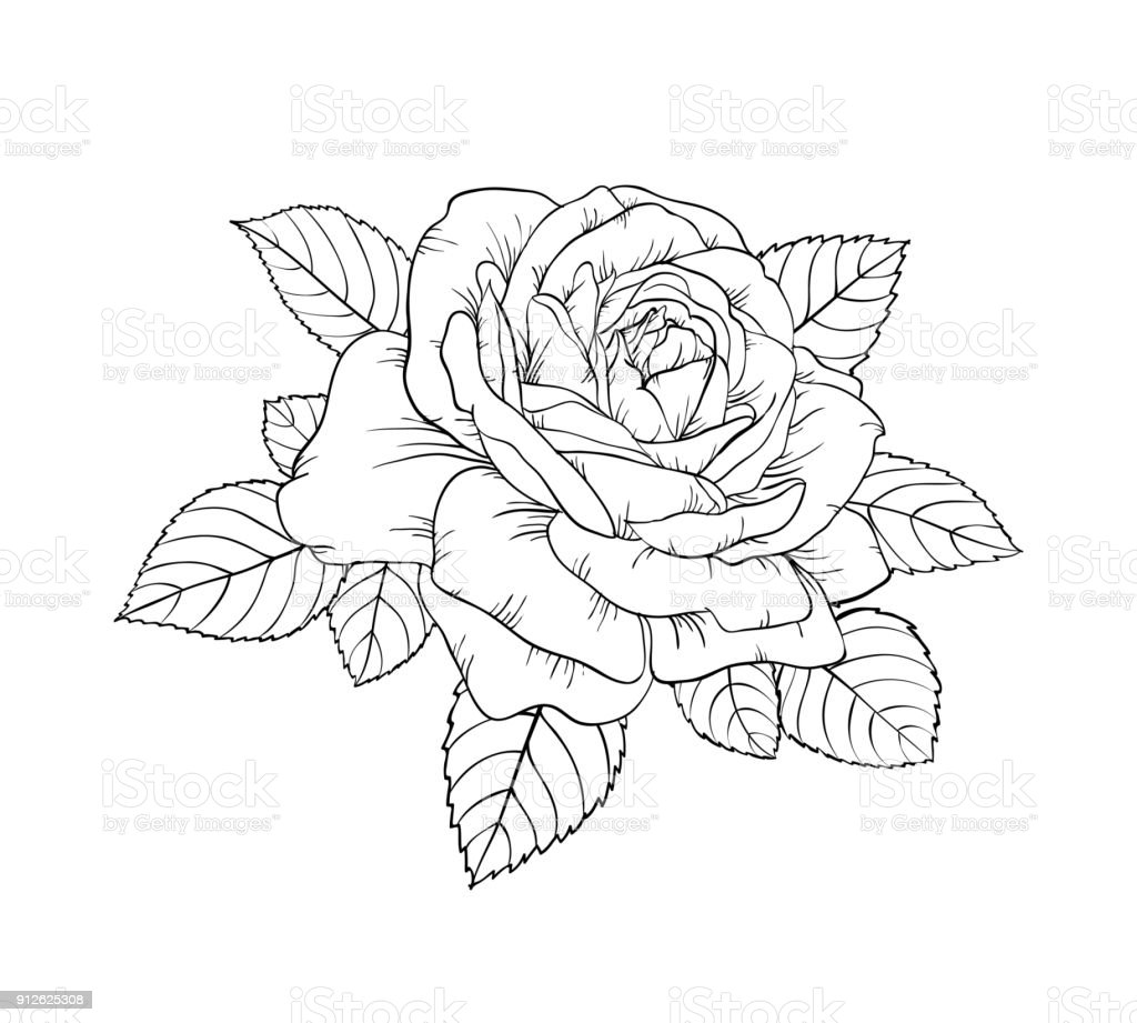 Top 60 Drawing Of The Rose Stem Tattoo Clip Art Vector Graphics And