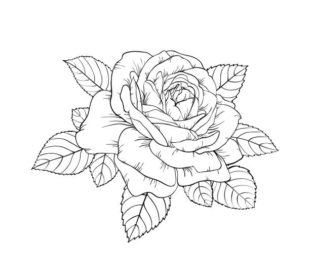 Royalty Free Drawing Of The Rose Stem Tattoo Clip Art Vector Images