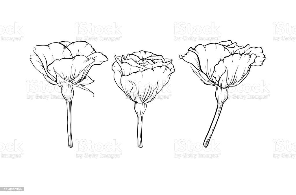 Ilustración De Hermosa Rosa Blanco Y Negro Aislado Sobre Fondo
