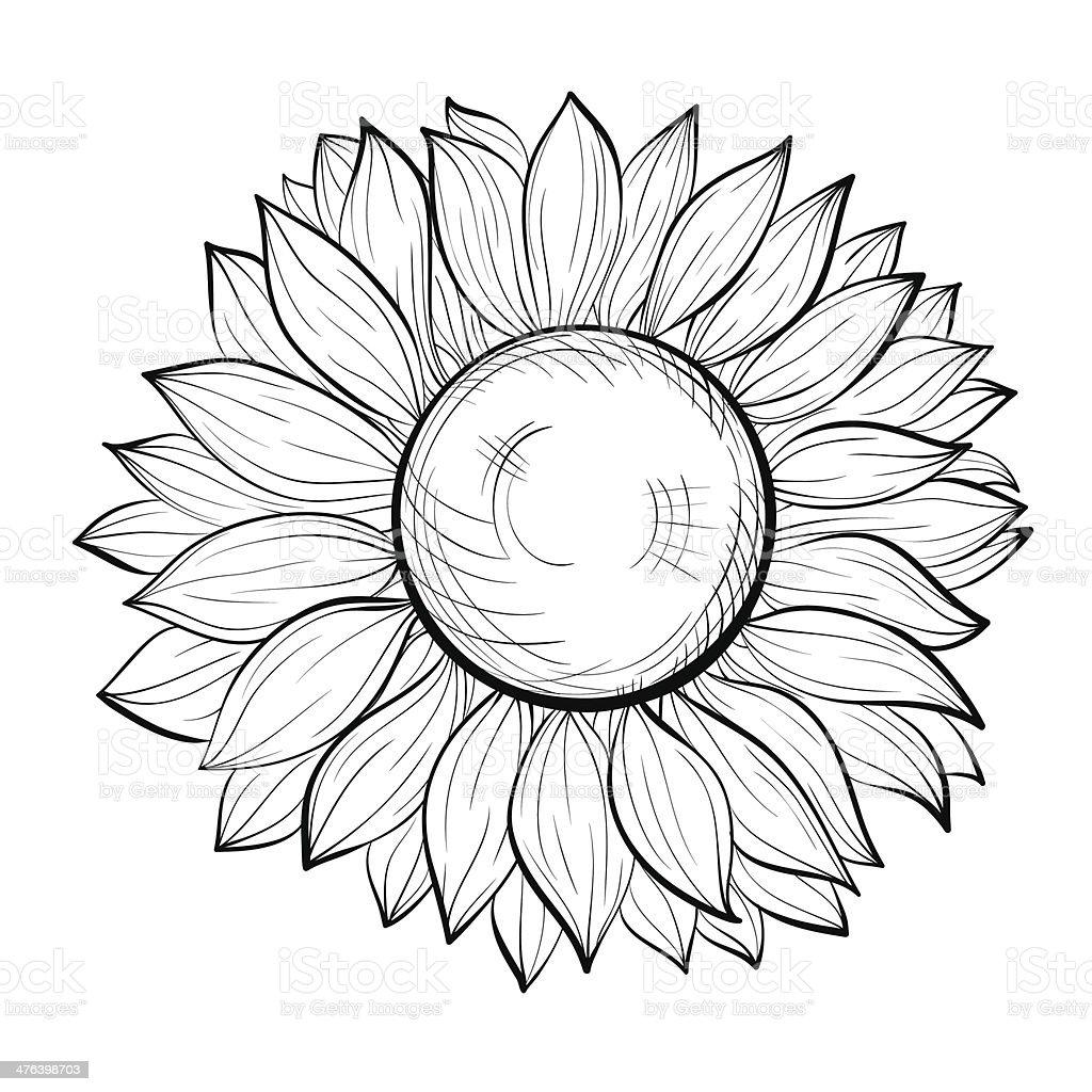 Ilustración De Hermoso Blanco Y Negro Girasol Aislado Sobre Fondo