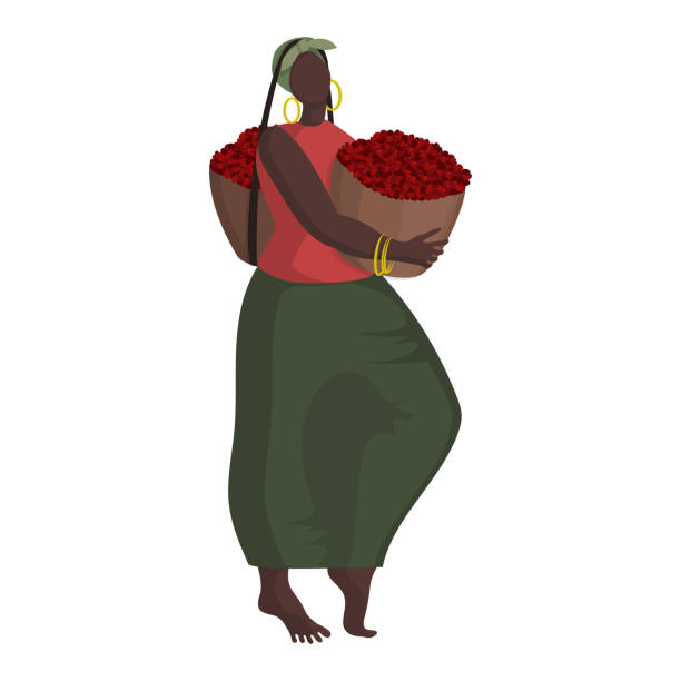 illustrazioni stock, clip art, cartoni animati e icone di tendenza di beautiful black woman in ethnic clothing with two baskets of coffee berries at the coffee harvest - coffee farmer