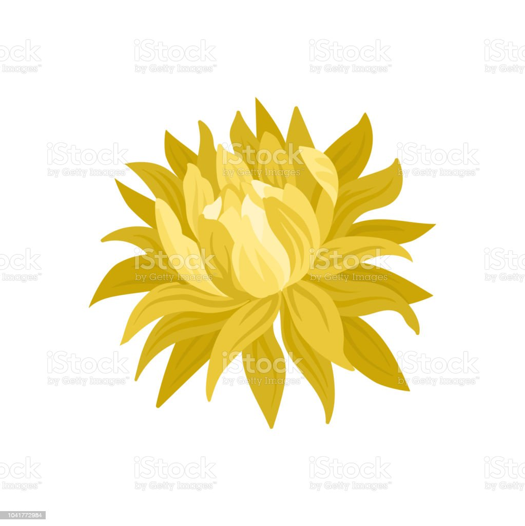 Beautiful Blooming Flower With Yellow Petals Nature Theme Flat