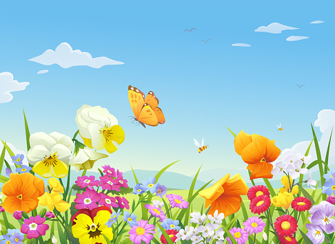 Butterfly stock illustrations
