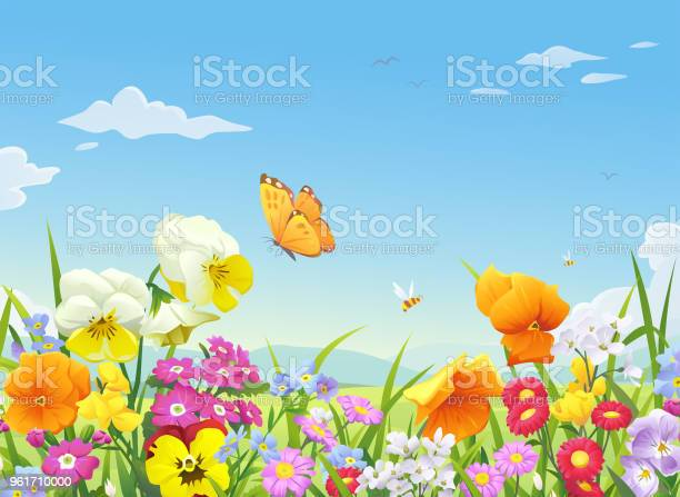 Beautiful Blooming Meadow Stock Illustration - Download Image Now