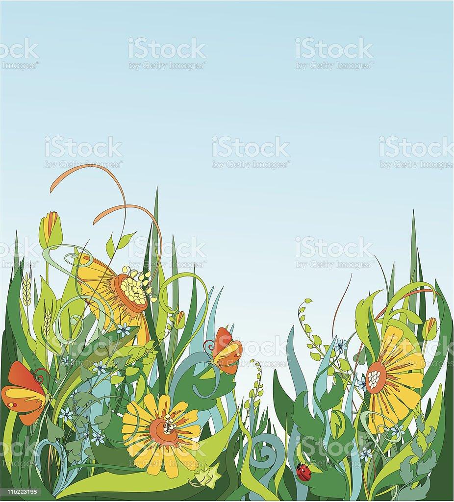 фото цветущий луг с бабочками