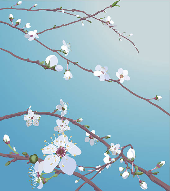 Beautiful blossom flowers Beautiful blossom flowers on a tree. No meshes used. Includes eps, AI CS and large jpeg files peach blossom stock illustrations