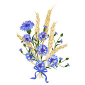 Beautiful bouquet of cornflowers and wheat spikelets, tied with silk ribbon Isolated on white. The best idea for greeting cards, invitations, wedding design