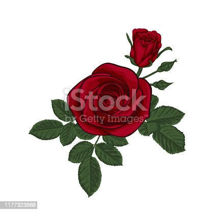 istock beautiful bouquet with red roses and leaves. Floral arrangement. design greeting card and invitation of the wedding, birthday, Valentine s Day, mother s day and other holiday 1177323568