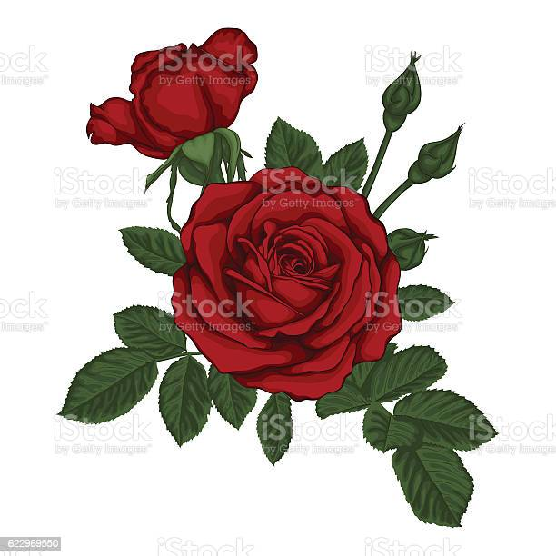 Beautiful bouquet with red roses and leaves floral arrangement vector id622969550?b=1&k=6&m=622969550&s=612x612&h=k8vhsvknwwfw2tciws0kaudtlxliekt81xzogcx0lrk=