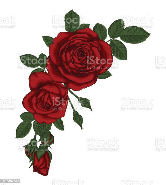 Beautiful bouquet with red roses and leaves floral arrangement vector id827397318?b=1&k=6&m=827397318&s=612x612&h=uzs7mgqfffu  5hobdebcxw72yy8qr2xkgaa01wcjbg=