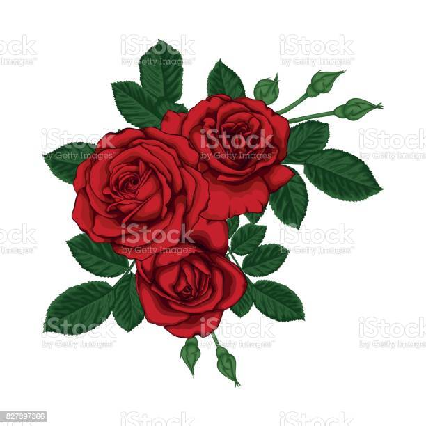 Beautiful bouquet with red roses and leaves floral arrangement vector id827397366?b=1&k=6&m=827397366&s=612x612&h=7rqnksivqskgkjpzhhrngzgfv ormcobx0m24ob0qek=