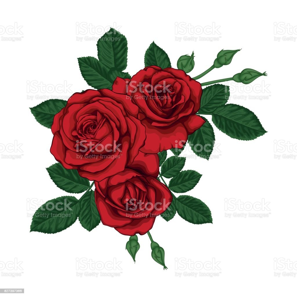 beautiful bouquet with red roses and leaves. Floral arrangement. vector art illustration