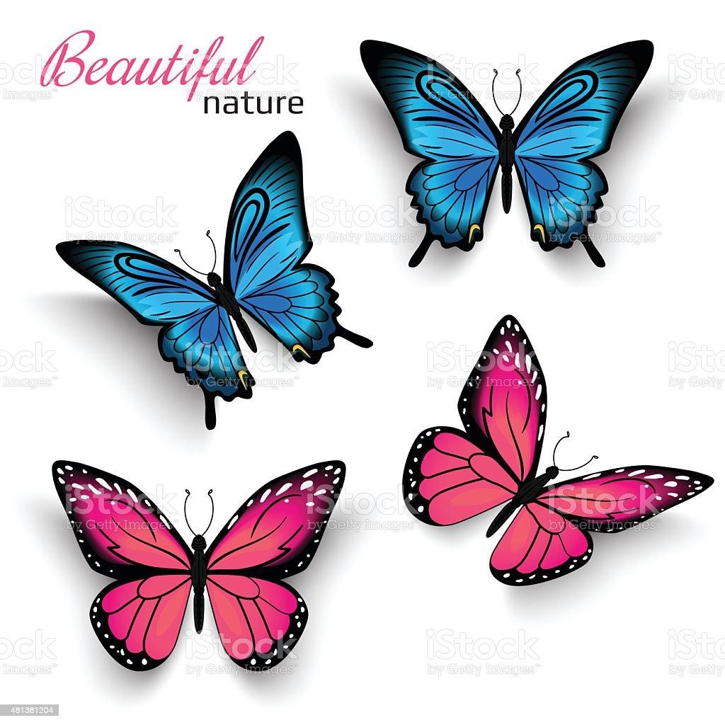 Beautiful butterflies vector art illustration