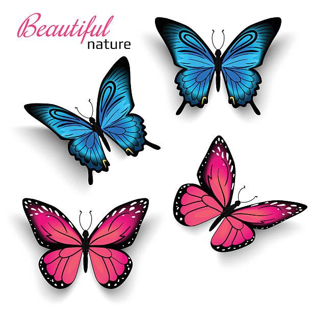 美しい蝶 - チョウ点のイラスト素材/クリップアート素材/マンガ素材/アイコン素材