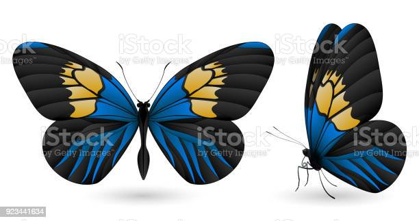 Beautiful butterfly isolated on a white background vector id923441634?b=1&k=6&m=923441634&s=612x612&h=xy65yu7q5uztyimlow3lvjhnbeibtuiptj5obaxydtg=