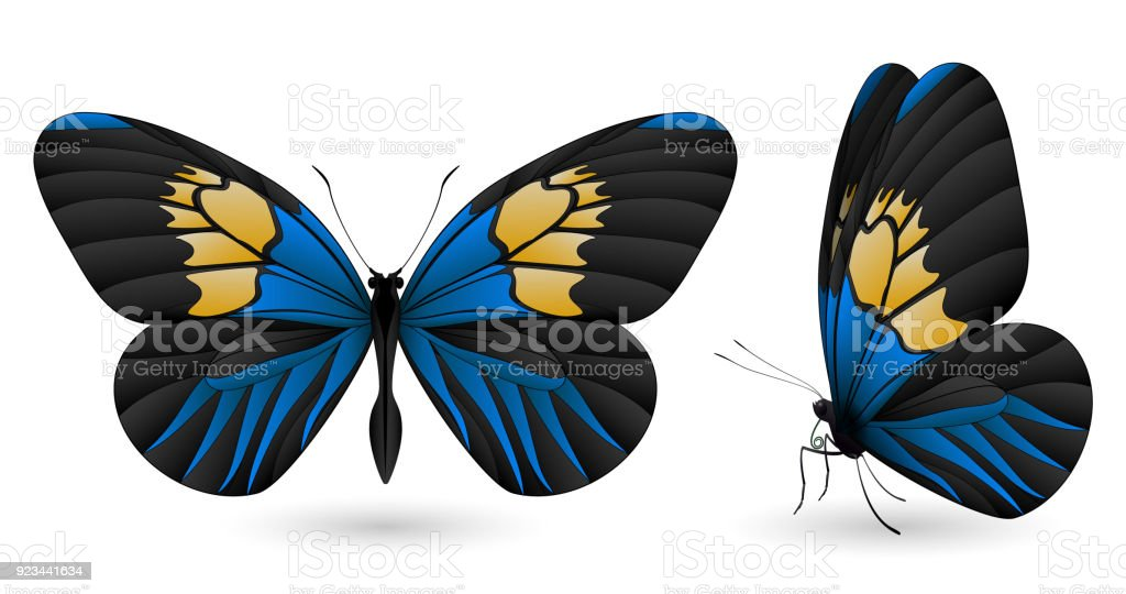 Beautiful butterfly isolated on a white background vector art illustration