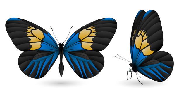 illustrations, cliparts, dessins animés et icônes de beau papillon isolé sur fond blanc - papillon