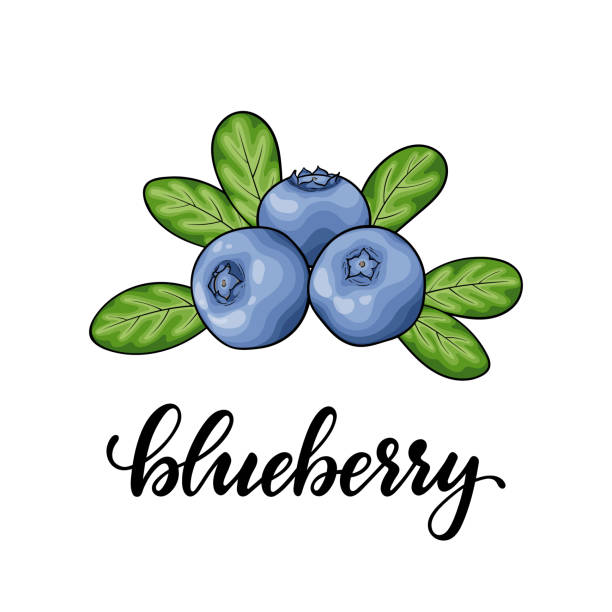 Beautiful cartoon red blueberry with lettering word blueberry, symbol of summer. design for holiday greeting card and invitation of seasonal summer holidays, beach parties, tourism and travel Beautiful cartoon red blueberry with lettering word blueberry, symbol of summer. design for holiday greeting card and invitation of seasonal summer holidays, beach parties, tourism and travel. bil stock illustrations