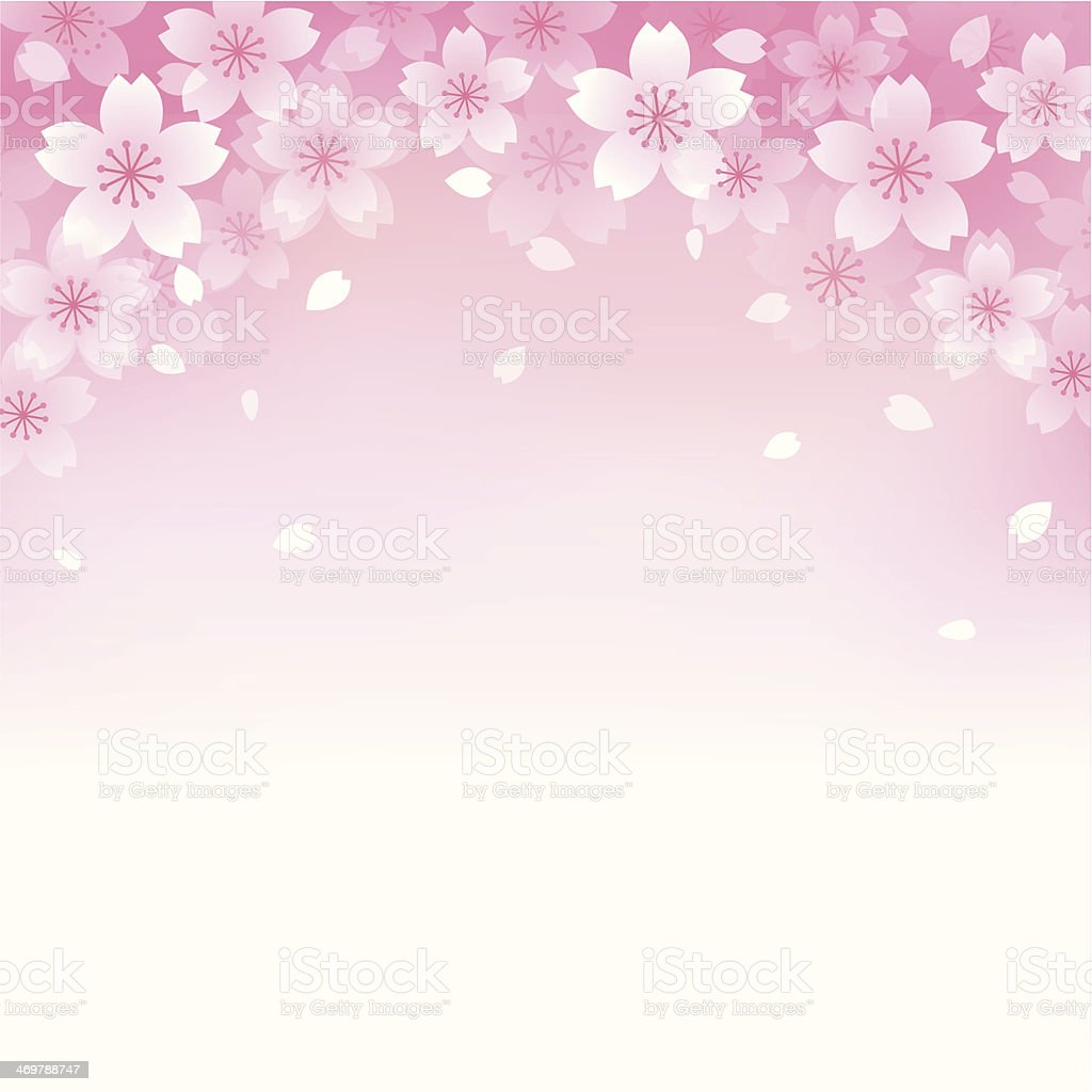 Beautiful Cherry blossom background vector art illustration