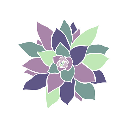 Beautiful collection with green and lilac succulent cactus hand drawn top view for decoration design. Vector template. Isolated illustration.