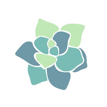 Beautiful collection with green succulent cactus hand drawn top view for decoration design. Vector template. Isolated illustration.