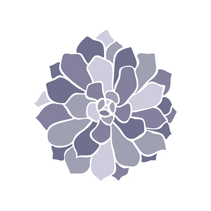 Beautiful collection with lilac succulent cactus hand drawn top view for decoration design. Vector template. Isolated illustration.