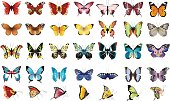 Beautiful colorful butterflies.
