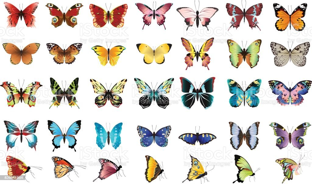 Schöne bunte Schmetterlinge. – Vektorgrafik