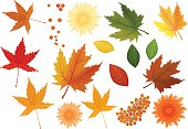 Beautiful colourful realistic autumn leaves and flowers set. Yellow golden red green keaves icolated.