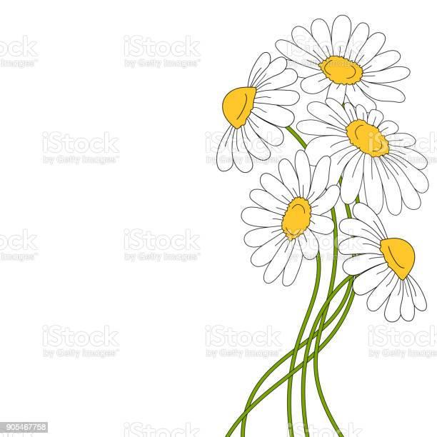 Beautiful daises on white background vector id905467758?b=1&k=6&m=905467758&s=612x612&h=qjxouheydhn gm0xggmu4bdoqsd0wf2jzctr3ktmasy=