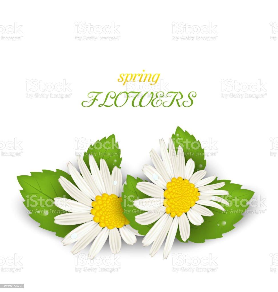 Beautiful daisy flower camomile stock vector art 622515872 istock beautiful daisy flower camomile royalty free stock vector art izmirmasajfo